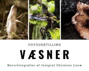 Fernisering - fotoudstilling væsner @ Kreativt Fitnesscenter
